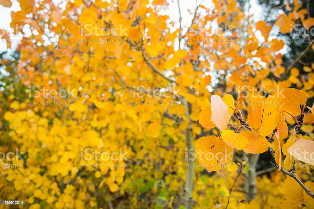 Fall Colors Back Ground stock photo