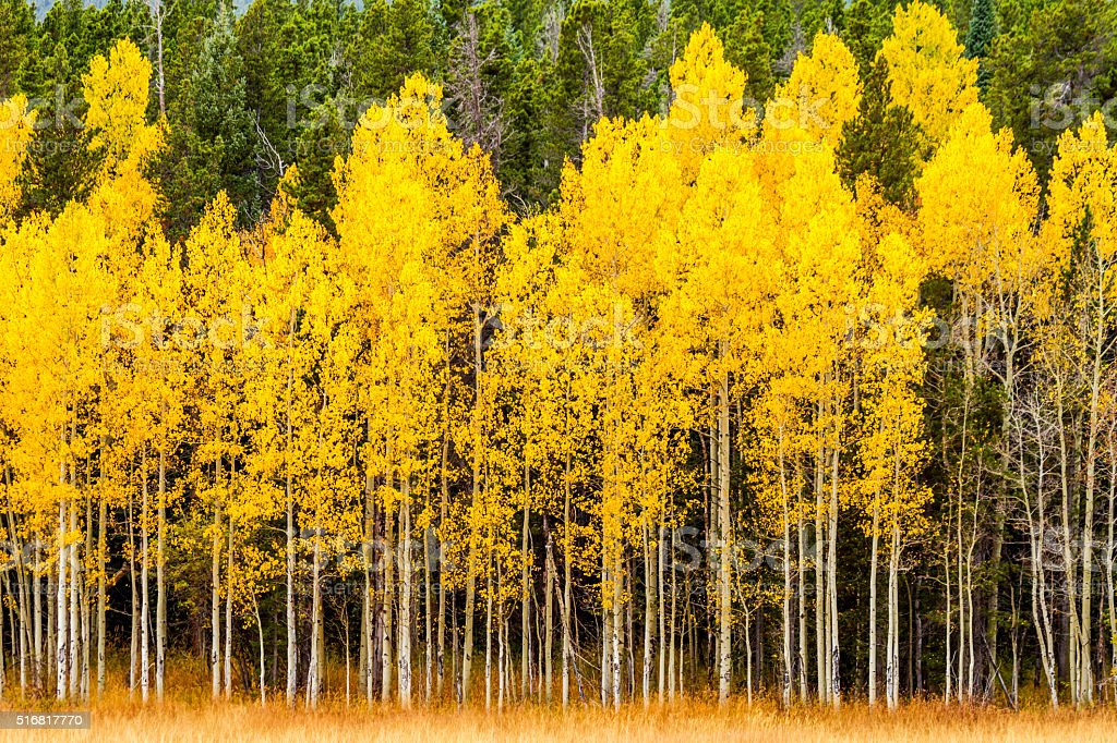 Fall Colors in Colorado Mountains stock photo