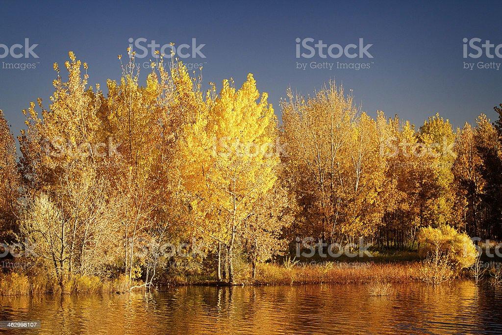 Fall Colors in Colorado stock photo