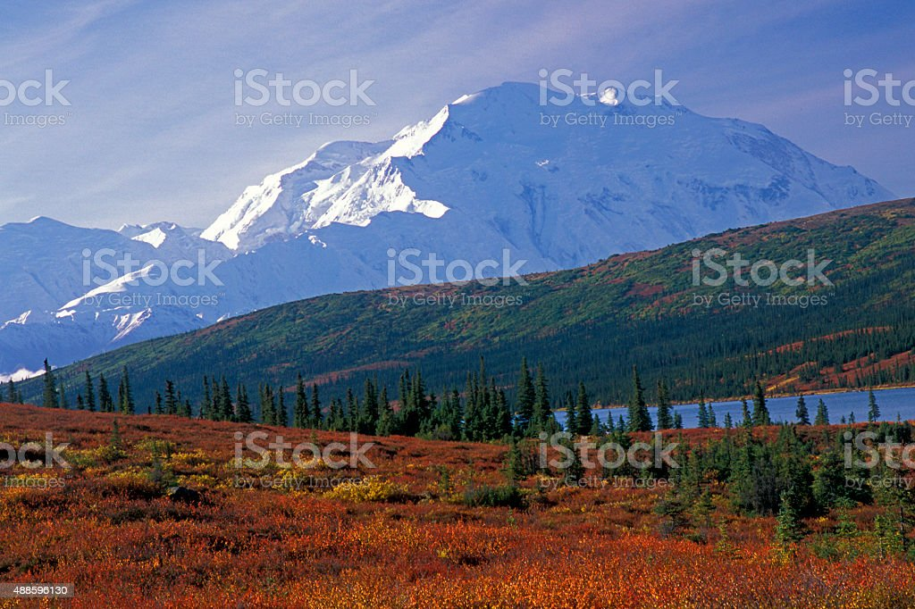 Fall Colors In Denali National Park stock photo