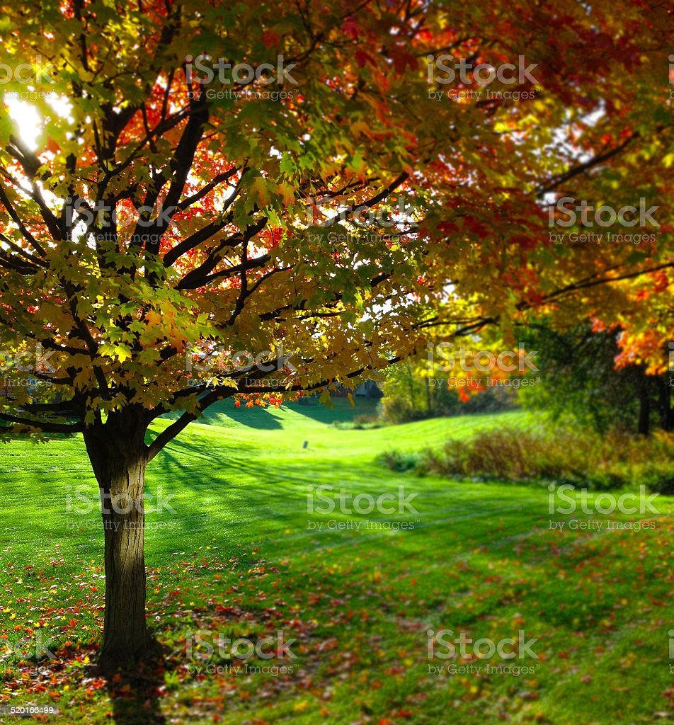 Fall Colors in the Midwest stock photo
