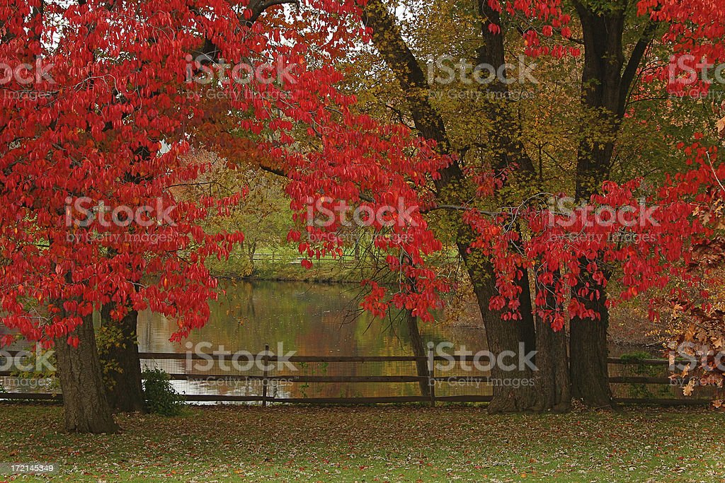 Fall colors in the park royalty-free stock photo
