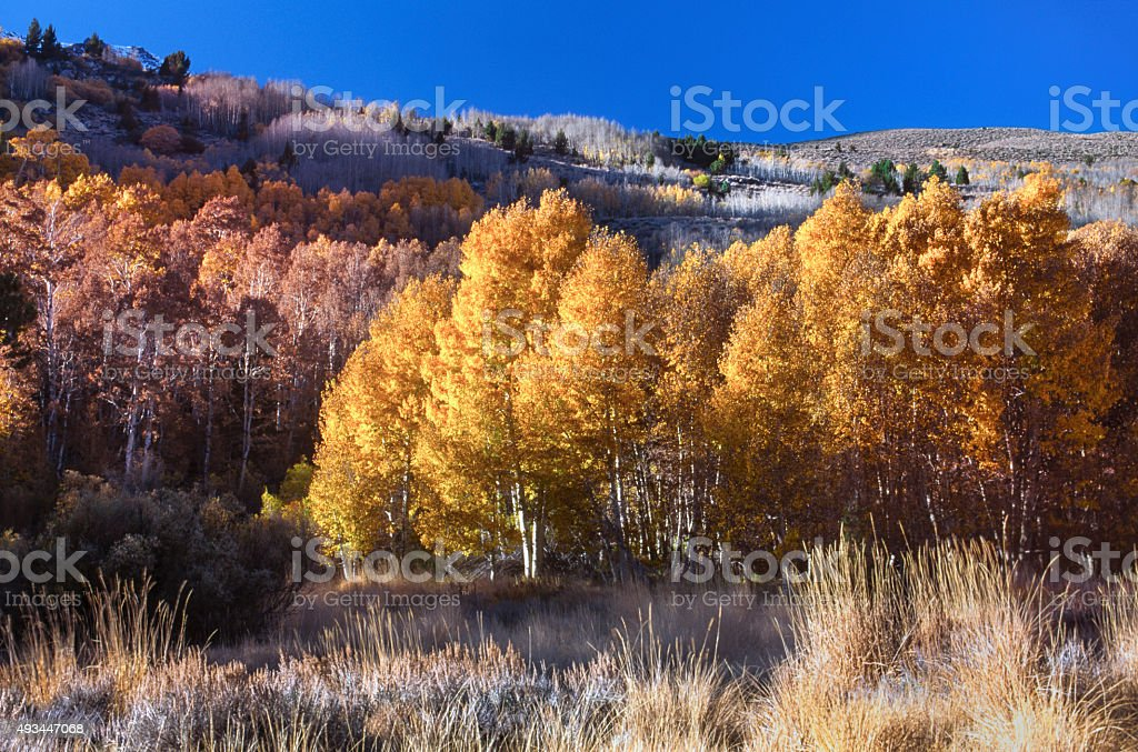 Fall Colors in the Sierra Nevada stock photo