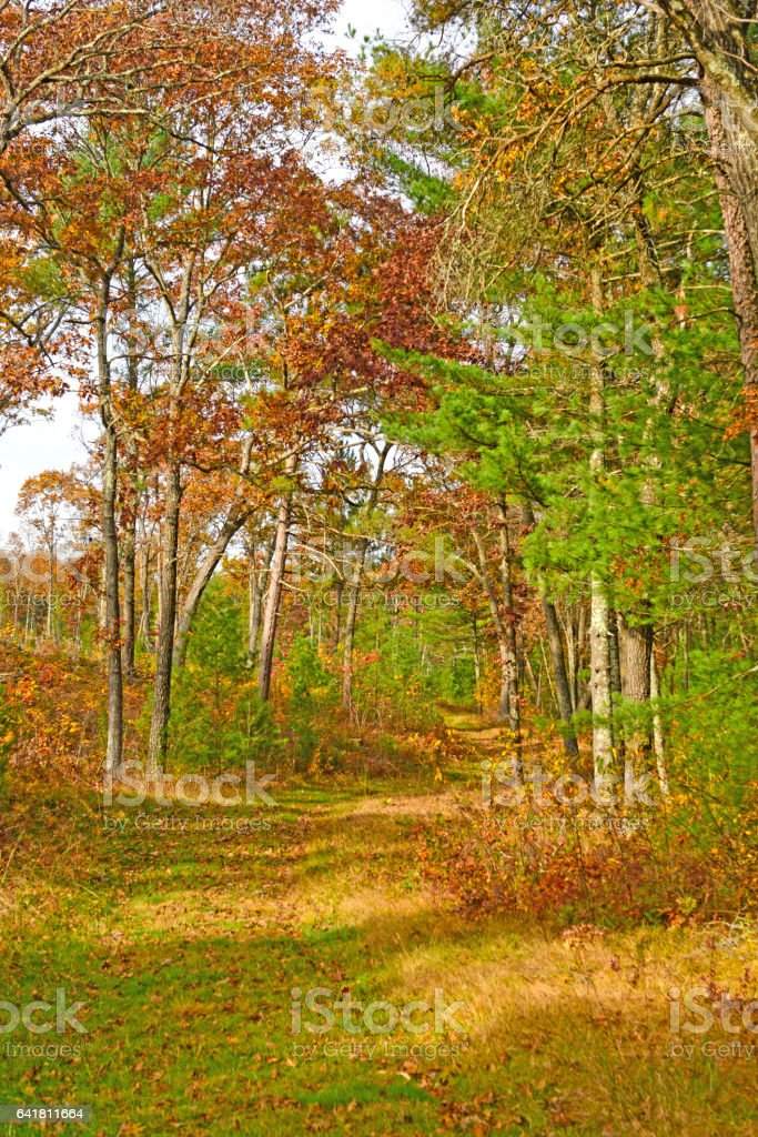 Fall Colors on a Forest Trail stock photo