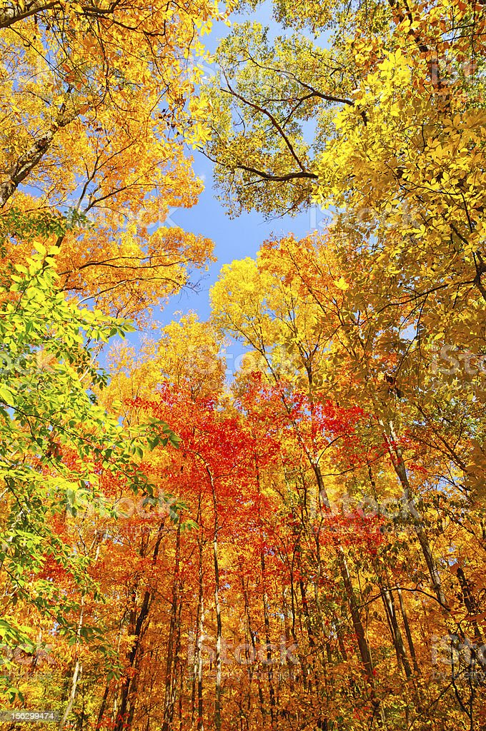 Fall Colors on a Midwest Trail stock photo