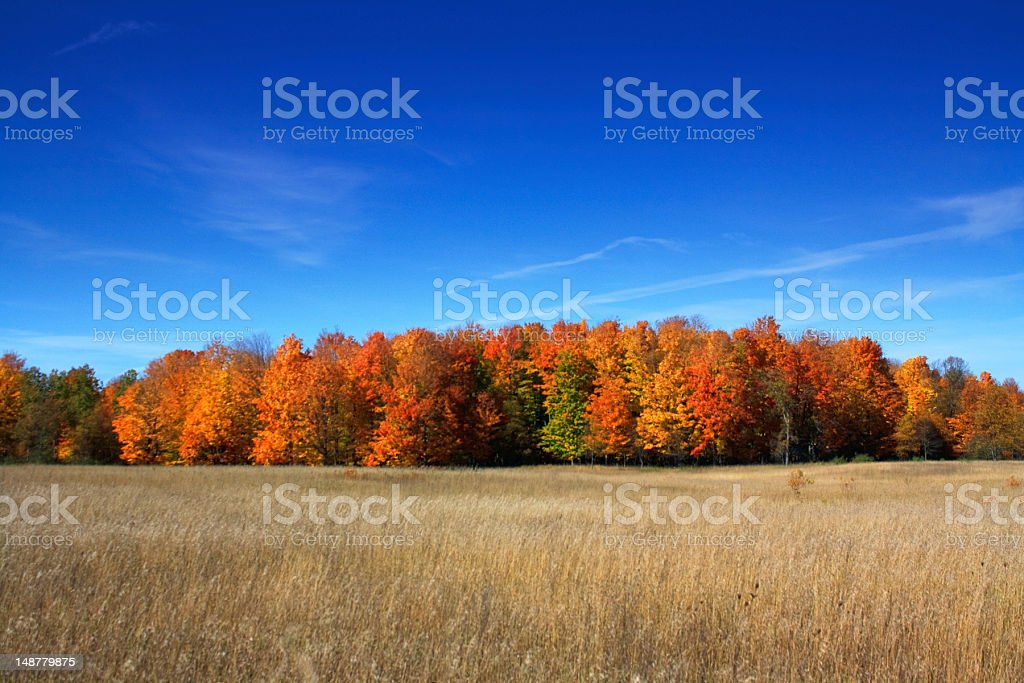 Fall colors over a field under bright blue skies stock photo