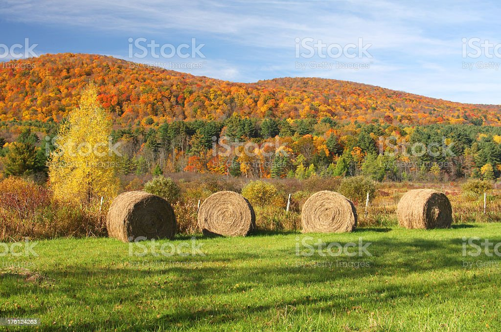 Fall Colors stock photo