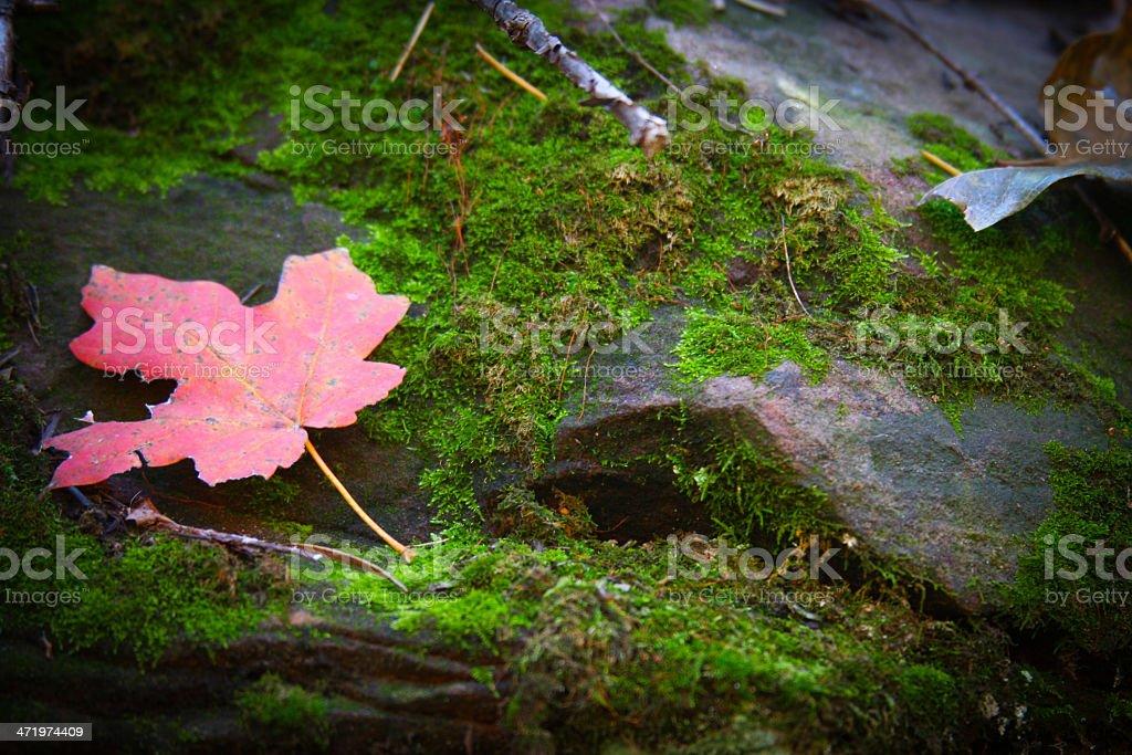 Jesienne kolory zbiór zdjęć royalty-free