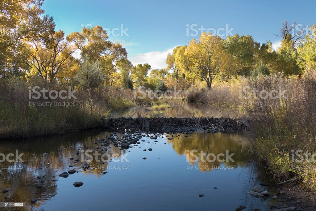 Fall colors Platte River beaver dam Chatfield State Park Colorado stock photo