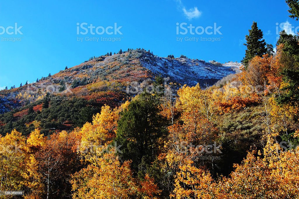 Fall colors, Utah royalty-free stock photo