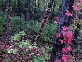 Fall colors, Western Massachusetts