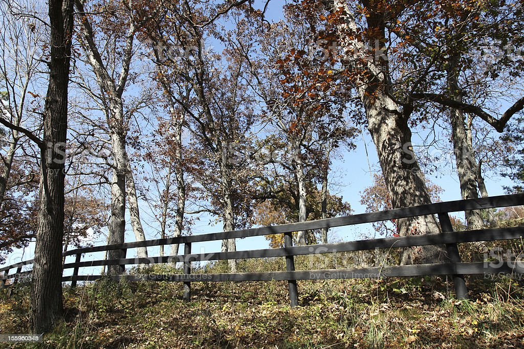 Fall colors with rustic fenceline stock photo