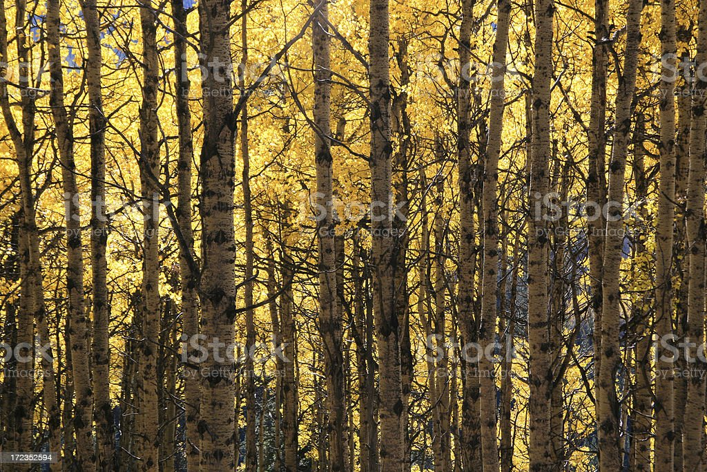 Fall Colour royalty-free stock photo