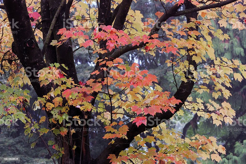 fall colours I royalty-free stock photo