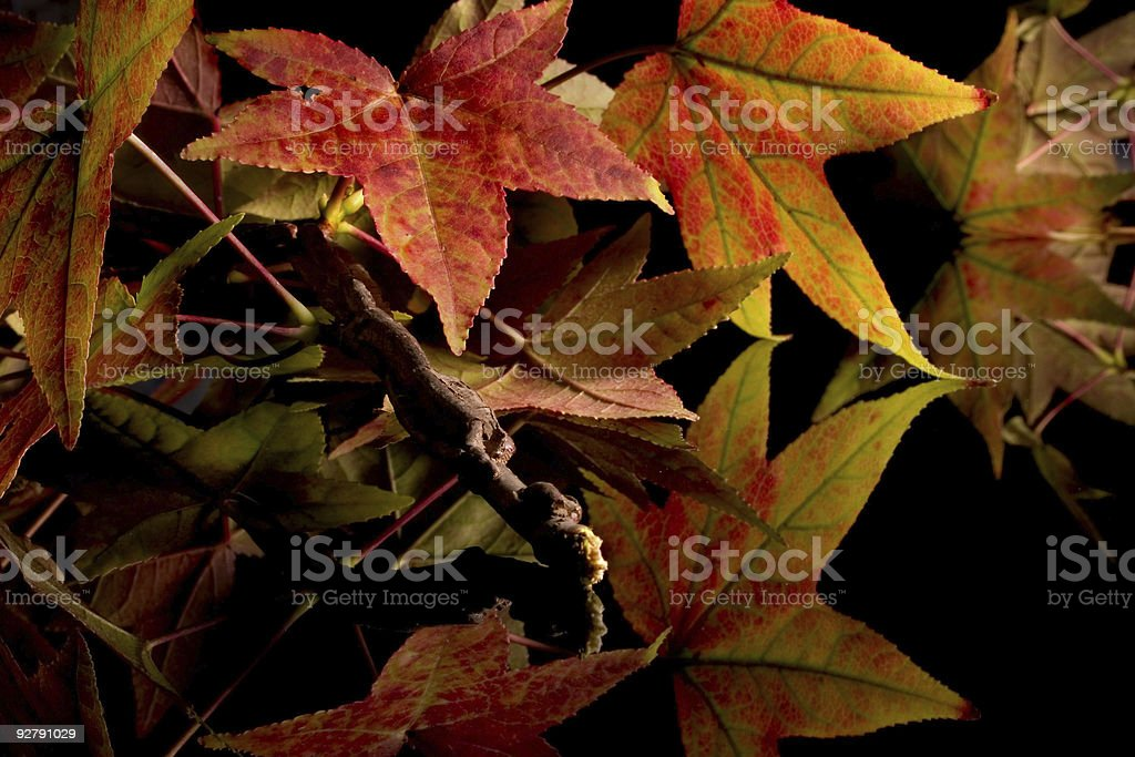 Fall Colours royalty-free stock photo