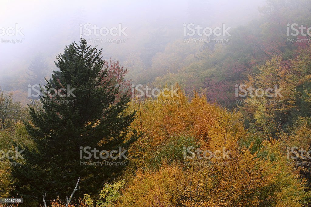 Fall Contrast royalty-free stock photo
