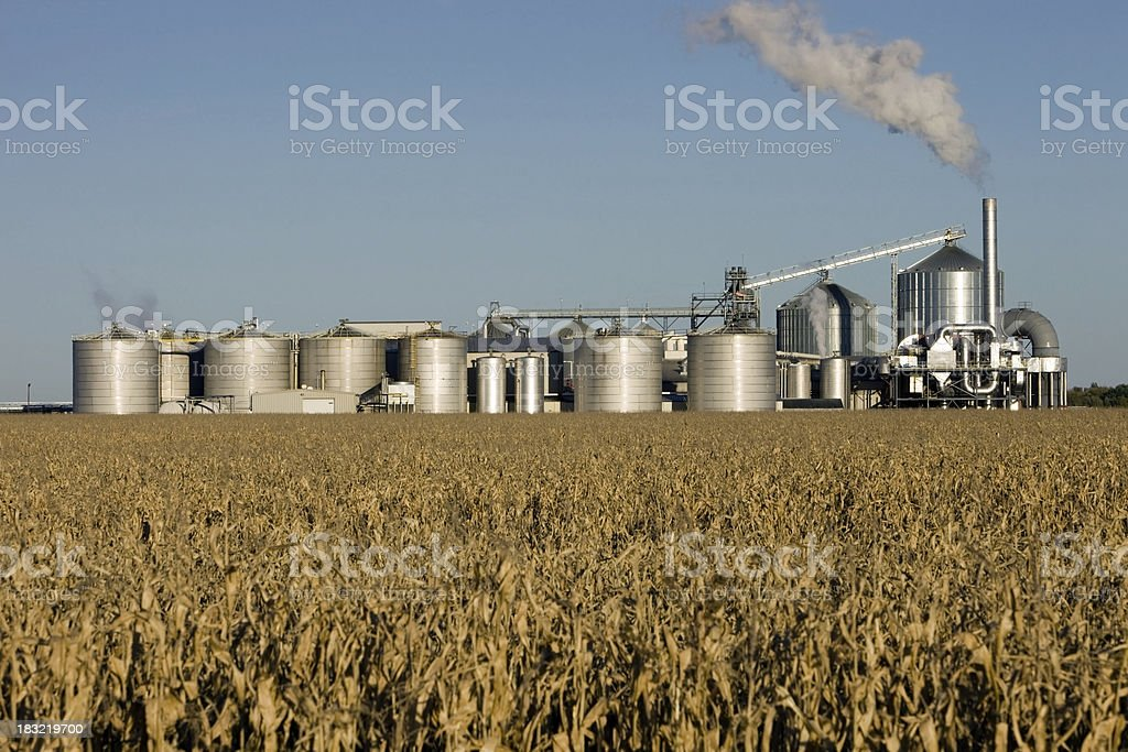 Fall Cornfield with Ethanol Biorefinery in the Background stock photo