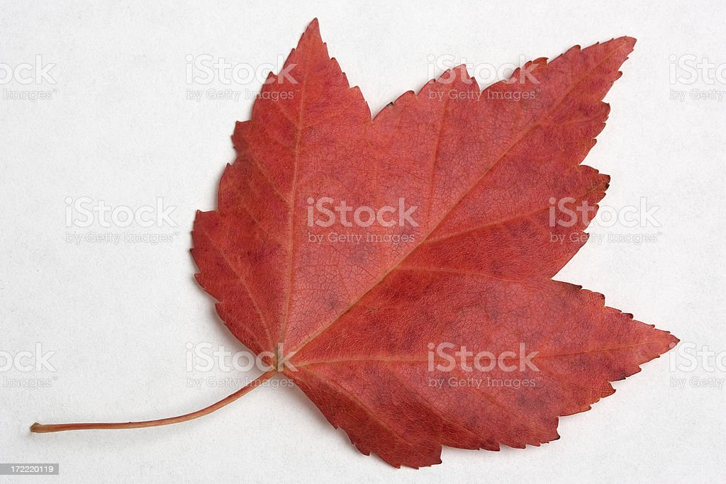 Fall Details royalty-free stock photo