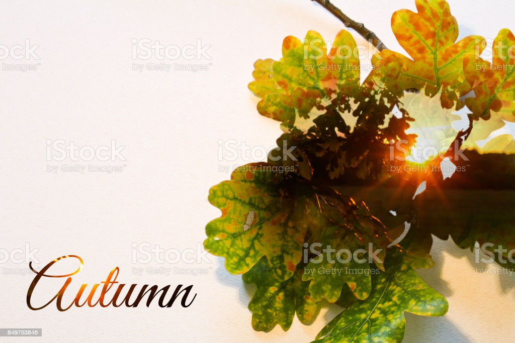 Fall double exposure in colorful leaves and sunset with text stock photo