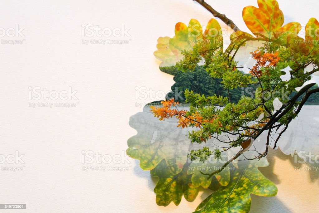 Fall double exposure in colorful leaves and tree trunk and pond stock photo