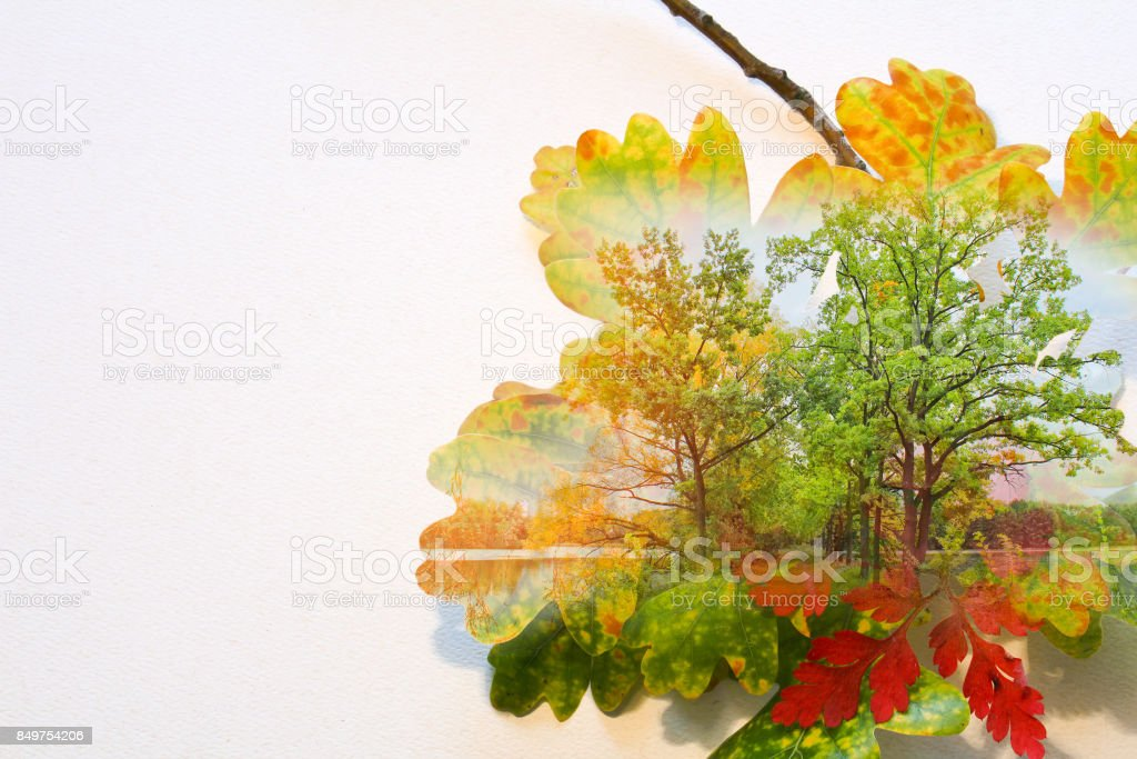 Fall double exposure in colorful leaves and trees stock photo