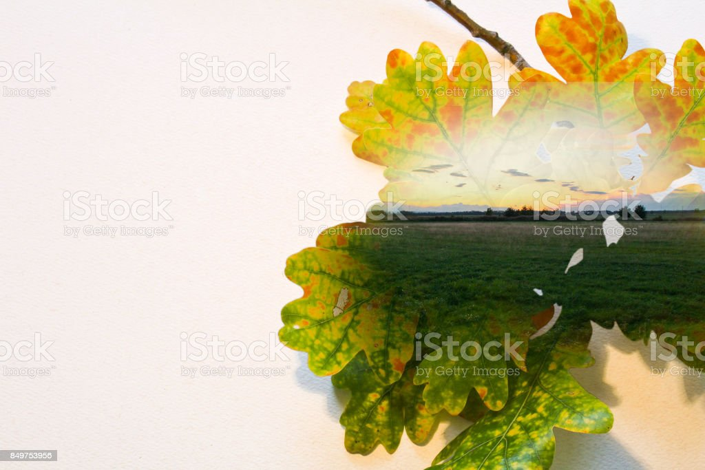Fall double exposure in leaf and sunset on meadow stock photo