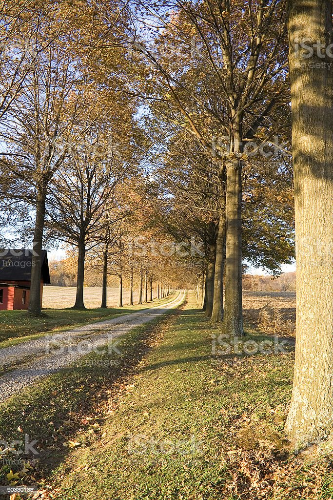 Fall driveway with line of trees royalty-free stock photo