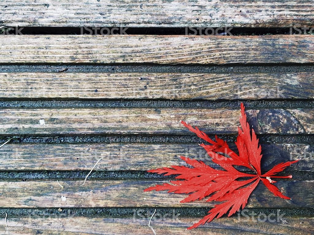 Fall Flower royalty-free stock photo
