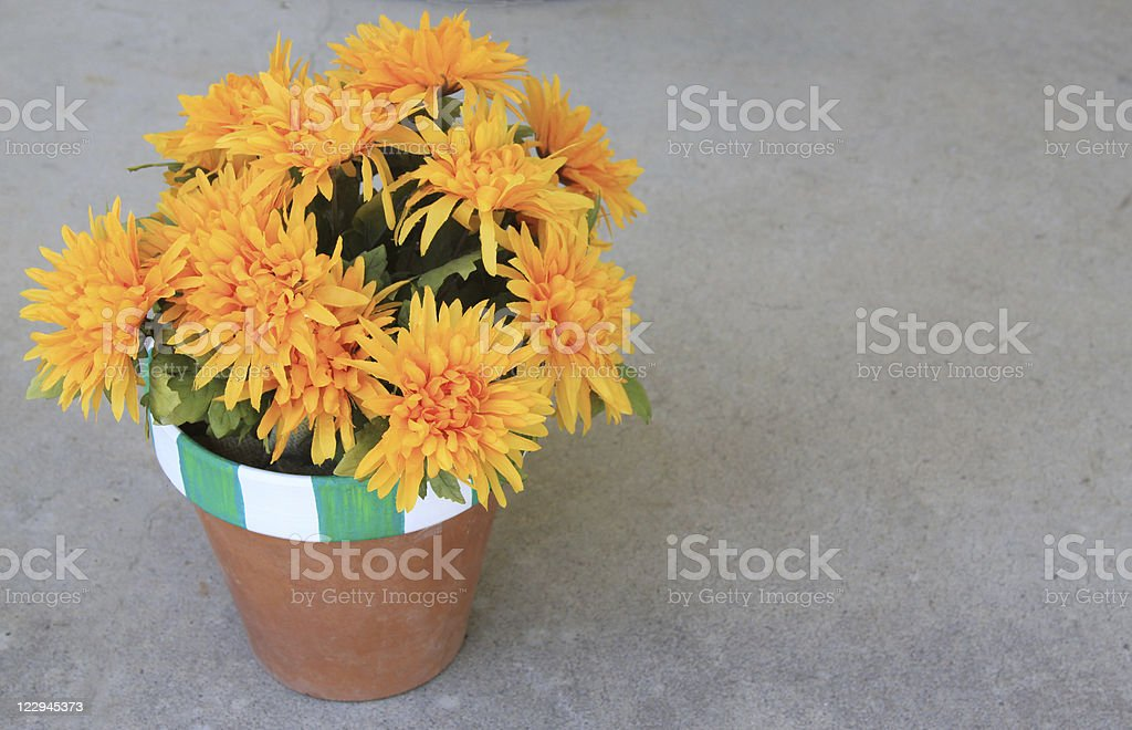 Fall Flowers in Striped Pot royalty-free stock photo