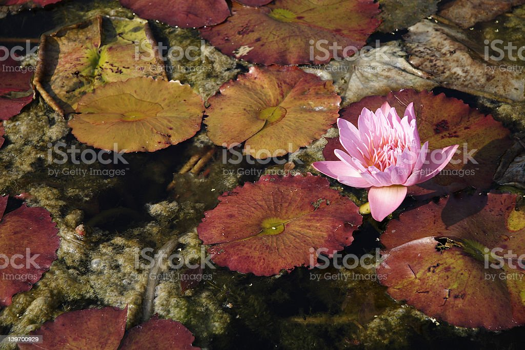 Fall Flowers royalty-free stock photo