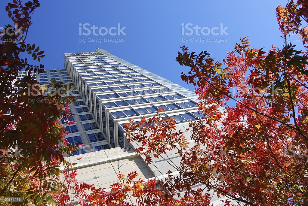 Fall Foliage and looking up at Building royalty-free stock photo