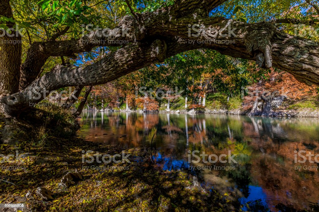 Fall Foliage at Guadalupe State Park, Texas stock photo