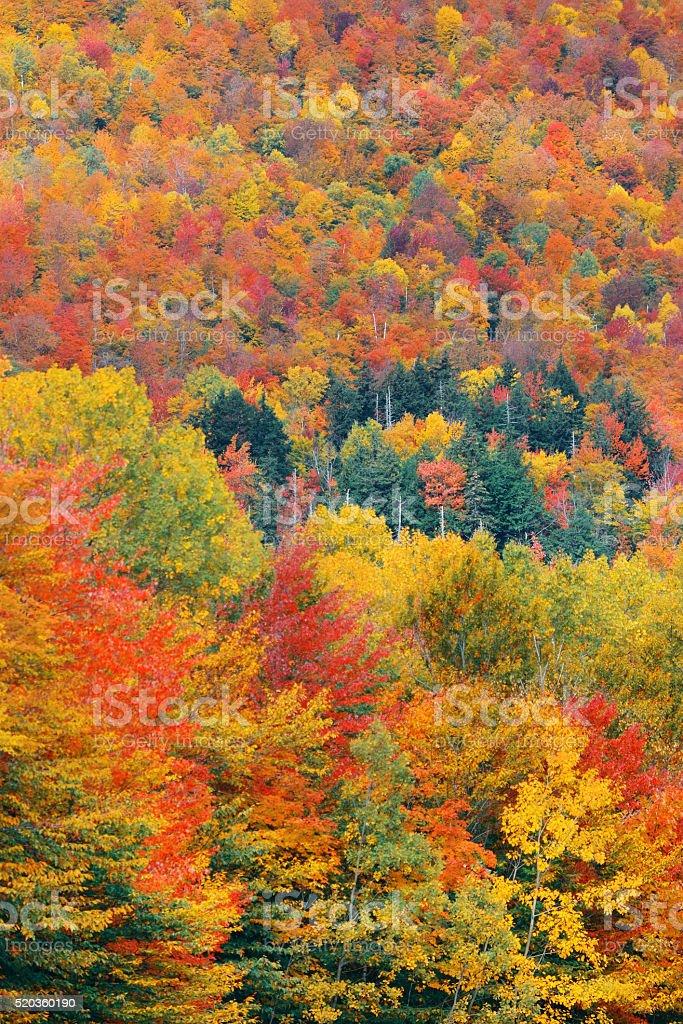 Fall Foliage background stock photo