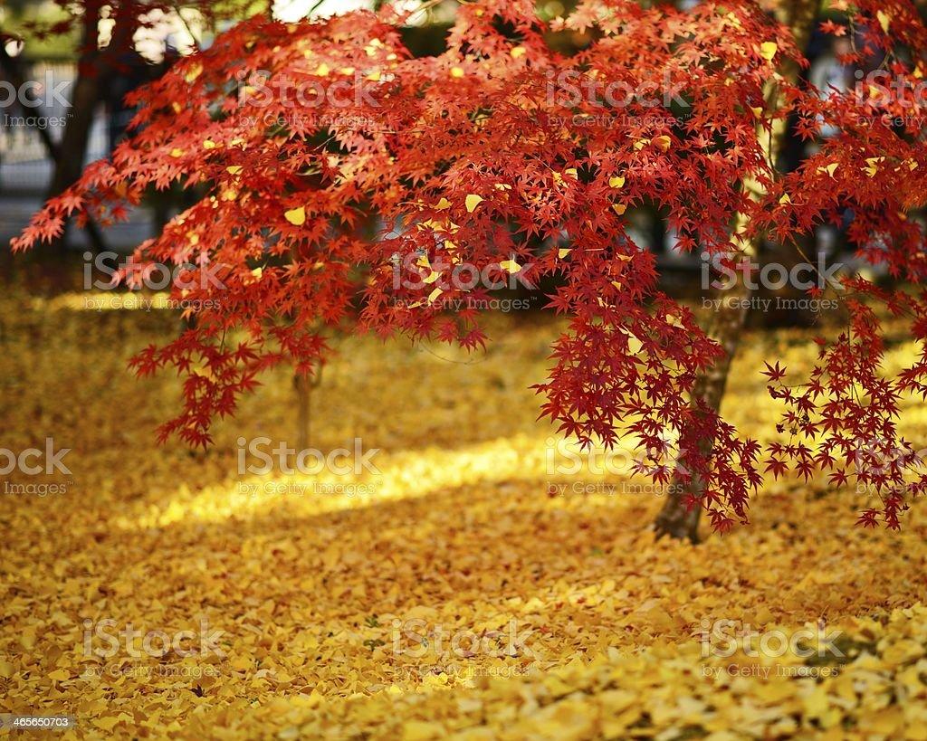 Fall Foliage in Kyoto royalty-free stock photo
