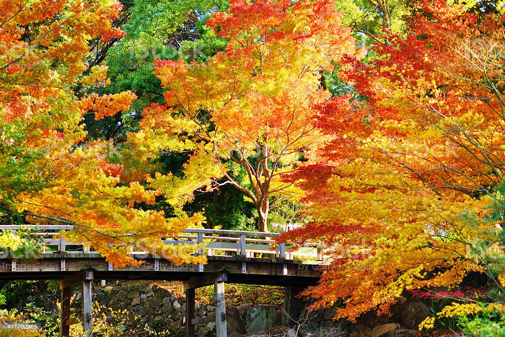 Fall Foliage in Nagoya stock photo