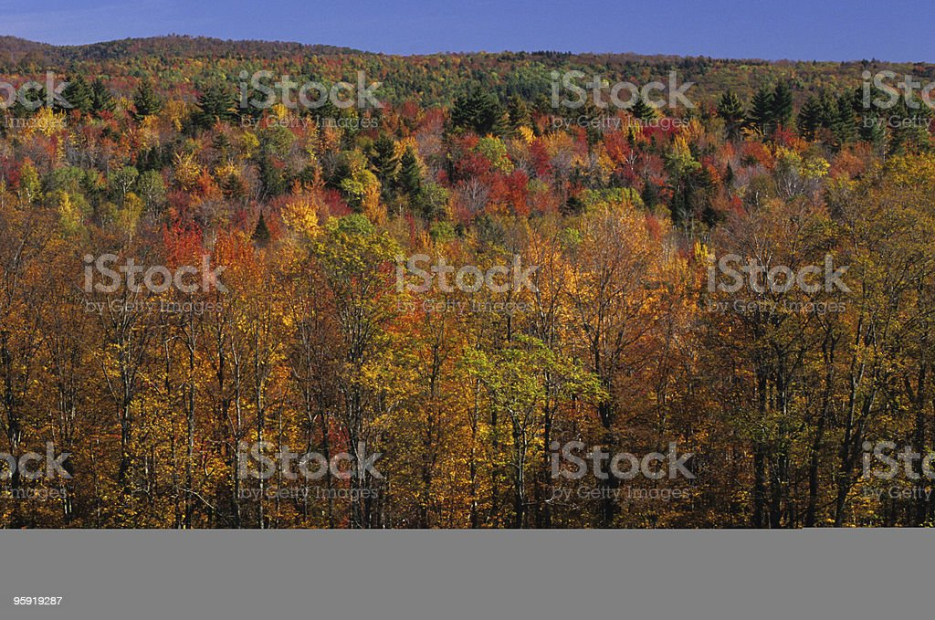 Fall foliage in the Green Mountains, Vermont royalty-free stock photo