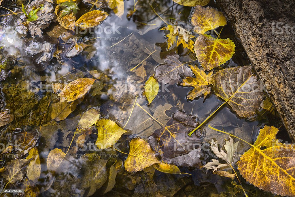 Fall Foliage  Leaves In A Small Creek Bed - HDR stock photo