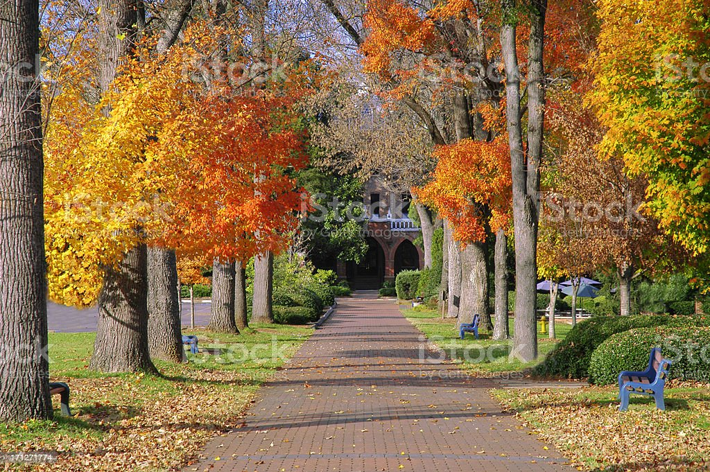 Fall Foliage on College Campus stock photo