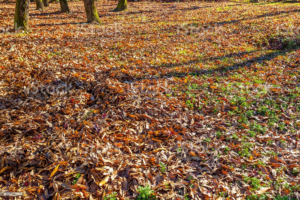 Fall foliage on lawn. Natural dry leaves in autumn stock photo
