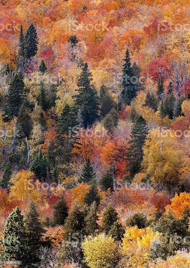 Fall foliage verticle background royalty-free stock photo