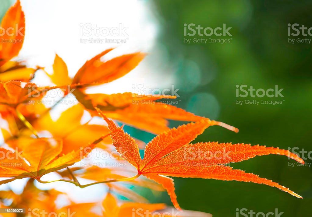 Fall foliage with green background stock photo