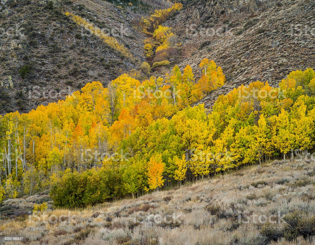 Fall Forest along June Lake Loop, California stock photo