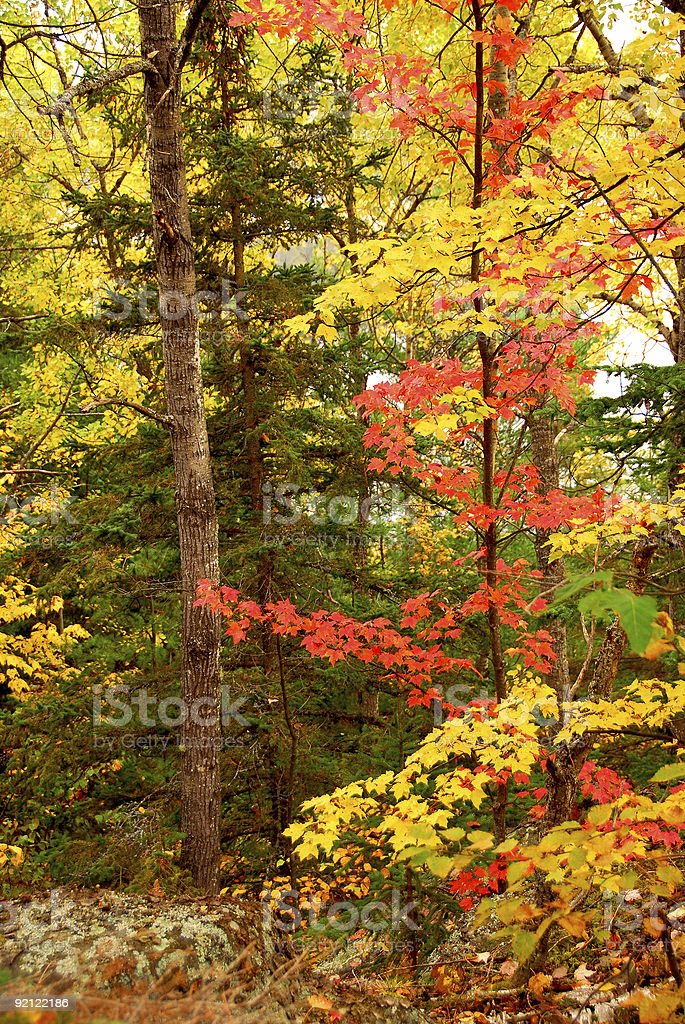 Fall forest background royalty-free stock photo