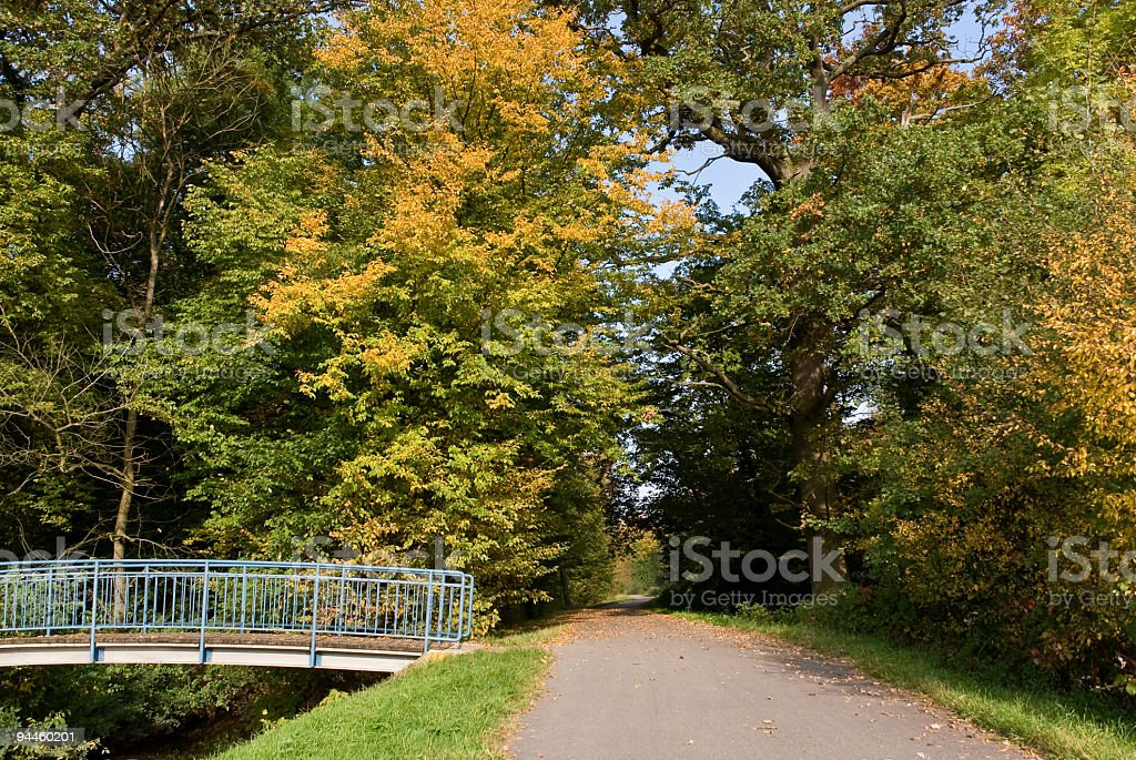 Fall Forest Landscape With Sun Light Through The Maple Foliage. royalty-free stock photo