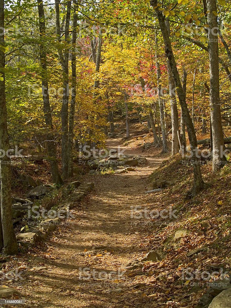 Fall Forest Path royalty-free stock photo
