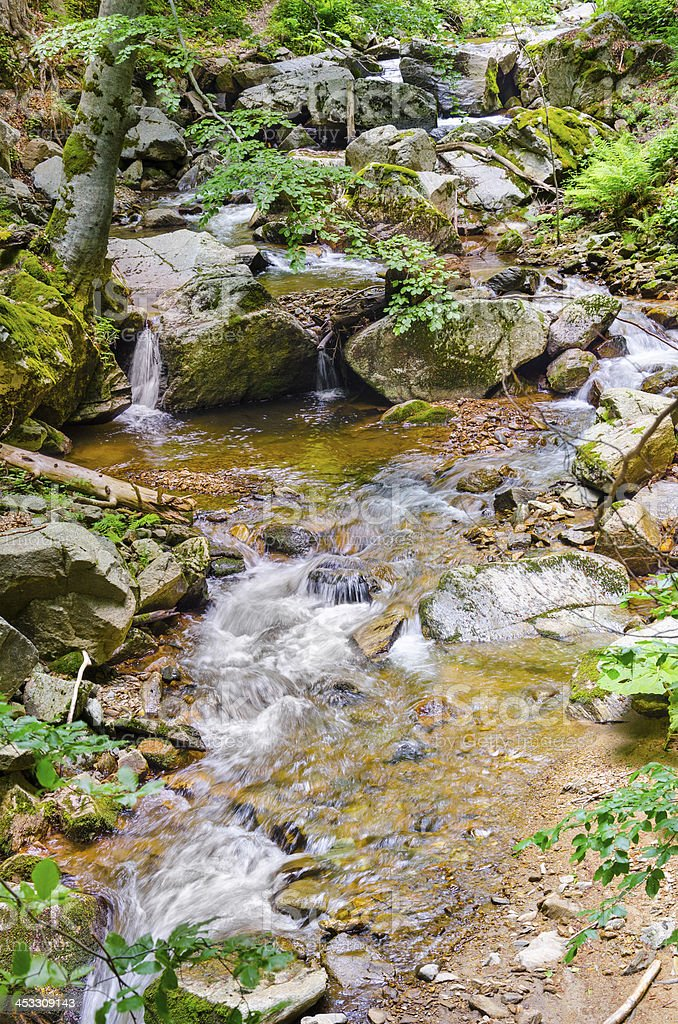 fall forest stream of ecology clean environment, Macedonia royalty-free stock photo