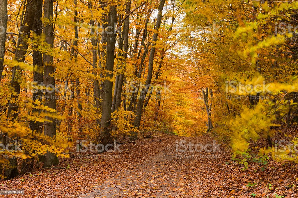 Fall Forest Trail royalty-free stock photo