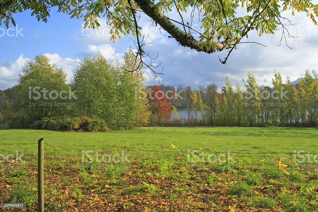 Fall From Under a Tree stock photo