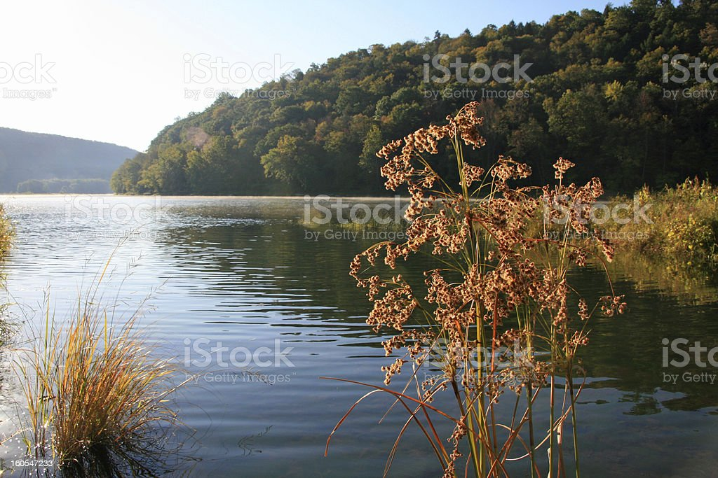 Fall Grasses Along The Allegheny River royalty-free stock photo