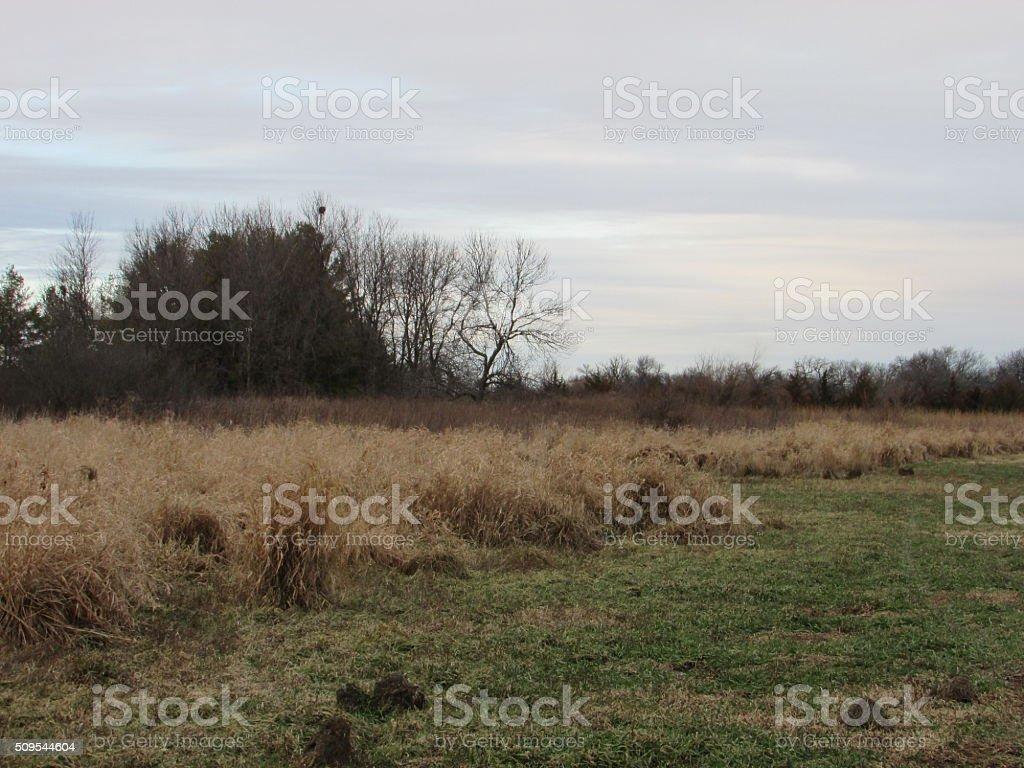 Fall Grassland stock photo